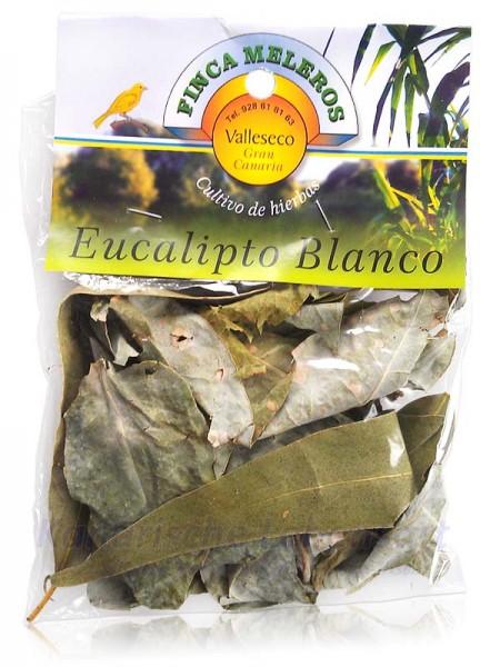 Eucalipto Blanco - kanarischer weißer Eukalyptus - 20g